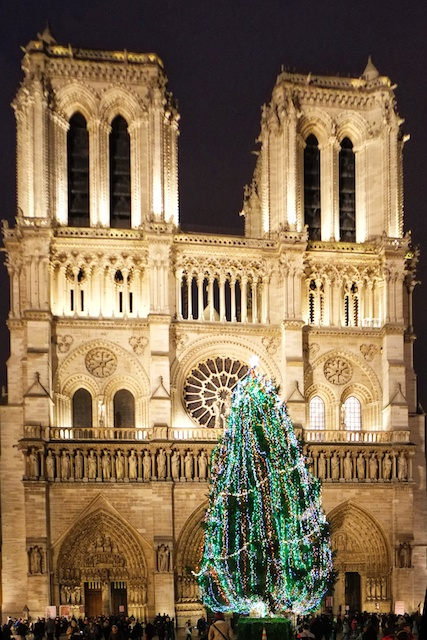 Christmas Tree at Notre Dame Cathedral